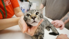 Clear the Shelters: Your Pet Adoption Photos