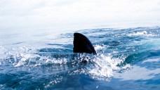 Fishermen Promise Fight as NJ Sen. Fights 'Shark Finning'