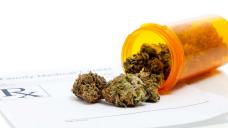 Medical Marijuana Brings Jefferson, Temple Together
