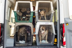 120 Dogs, Cats in Path of Tropical Storm Barry Arrive in Va.