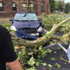 Tree Demolishes Car in New Jersey During Strong Storms