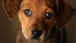 Cash-Strapped Delaware SPCA Closing Shelter