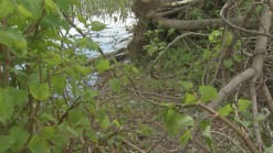 Volunteers Find Human Remains in Cooper River