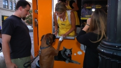 Ali Serves Treats to her Puppy Patrons at Fido