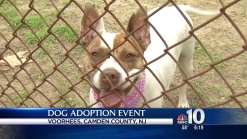 'Wanna Be' Events Connects Families and Dogs
