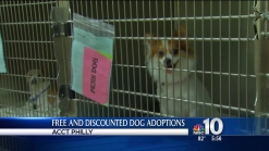 Pope's Visit Helping Puppies Get Adopted