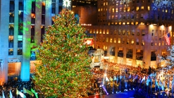 Old Rockefeller Tree Used for Philly Homes