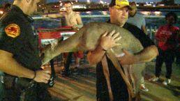 Man Braves Iowa Flood Waters to Save Deer