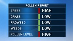 Sneeze-Worthy! Tree, Pollen Allergies at High Levels