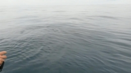 RAW VIDEO: Great White Shark