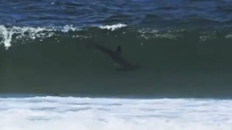 Caught on Cam: Hammerhead Shark at NJ Beach