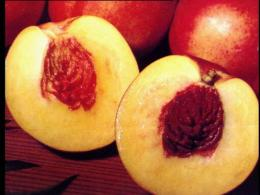 RECALL: Fruit Sold at Giant Supermarkets