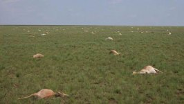 60,000 Antelope Mysteriously Died in 4 Days