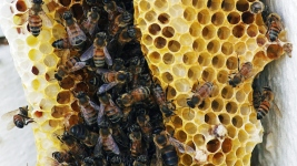 South Texas Farmer Stung to Death by Hundreds of Bees