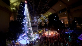 Australian Christmas Tree Sets Record With 518,838 Lights