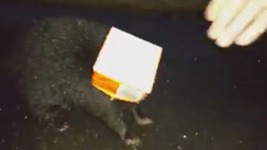 WATCH: Officer Saves Skunk Trapped in Orange Juice Carton