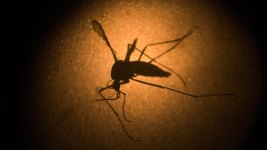 Zika Will Spread Like Chikungunya: CDC