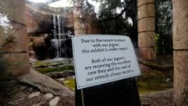 Official: Escaped Jaguar Bit Through Steel Cable Barrier