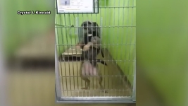 Shelter Dog's Dazzling Dance Moves Go Viral