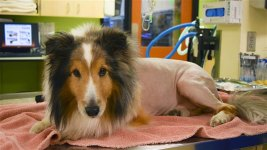Doctors' Last-Minute Diagnosis Saves Dog's Life