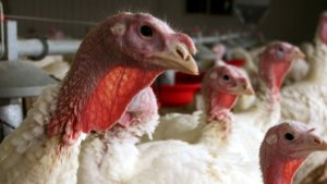 Pa. Prepares for Possible Arrival of Deadly Bird Flu