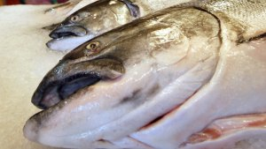 Genetically Modified Salmon OK'd for Human Consumption in U.S.