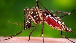 First Case of Zika Virus Confirmed in Massachusetts