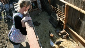 Backyard Chickens, Ducks Linked to Salmonella Cases: CDC