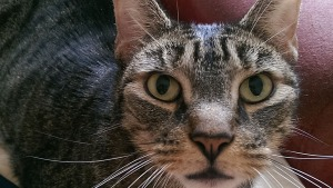'Easy Transition': Older Pets Become Instant Companions