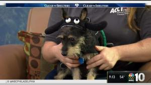 Clear the Shelters: Meet Mulligan