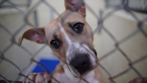 Clear the Shelters: Thousands of Animals Find Forever Homes