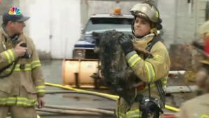 Firefighters Rescue 6 Dogs From House Fire