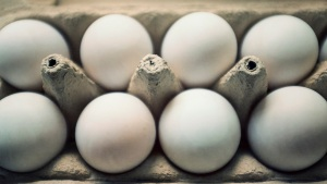 Iowa Egg Farmers Slowly Recovering From Bird Flu