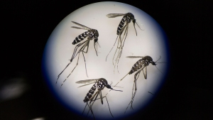 Is New Jersey Prepared for Zika?