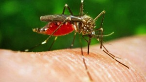 EU Regulator Recommends 1st License for Malaria Vaccine