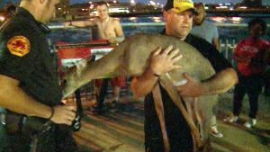 Man Braves Iowa Flood Waters to Save Deer
