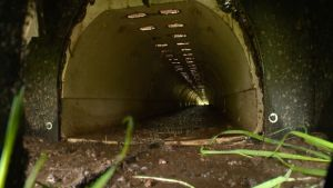 Tunnel Helps Turtles Cross Dangerous Road