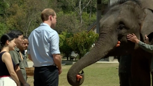 Prince William Visits Elephant Sanctuary