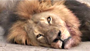 'Shame on Him': Stars Condemn Lion Killing