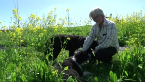 WATCH: Truffle-Hunting Dogs Sniff Out Prized Fungus