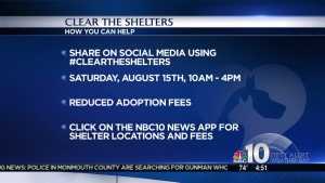 Local Shelters Looking to Find Families for Pets