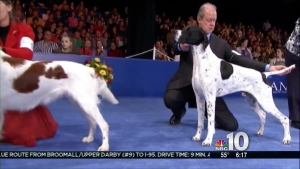 National Dog Show Prep in Montco