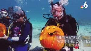Divers Carve Pumpkins Underwater in Florida Keys