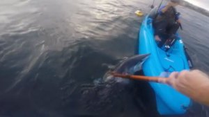 WATCH: SoCal Angler Hooks Shark That Bites His Kayak