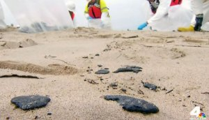 Petroleum Glob Cleanup on Beaches