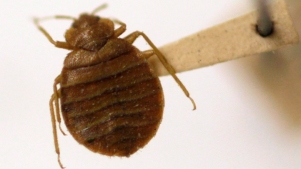 New Task Force to Combat Bed Bugs in Philly