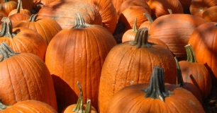 Pumpkin Shortage Could Hit By Thanksgiving