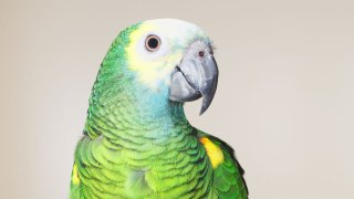 New Jersey Woman Gets Ticket After Someone Squawks About Her 2 Loud Parrots
