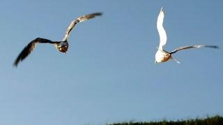 Massachusetts Man Sues Neighbor Over Seagull Mess