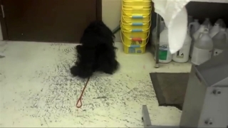 [NY] Abandoned Dog Couldn't Walk Under Matted Fur: SPCA